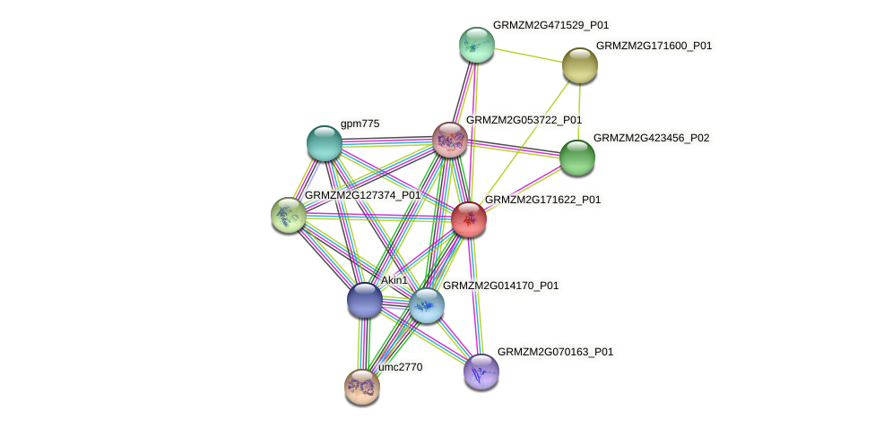 GRMZM2G171622_P01 protein (Zea mays) - STRING interaction network