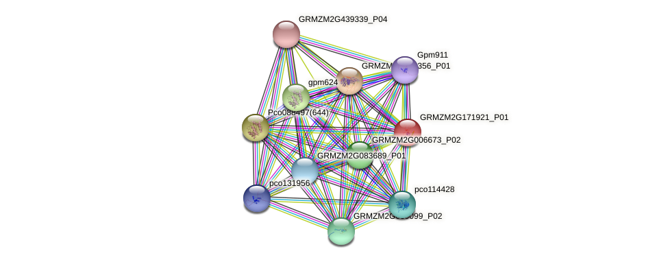 GRMZM2G171921_P01 protein (Zea mays) - STRING interaction network
