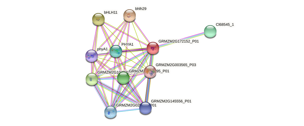 GRMZM2G172152_P01 protein (Zea mays) - STRING interaction network
