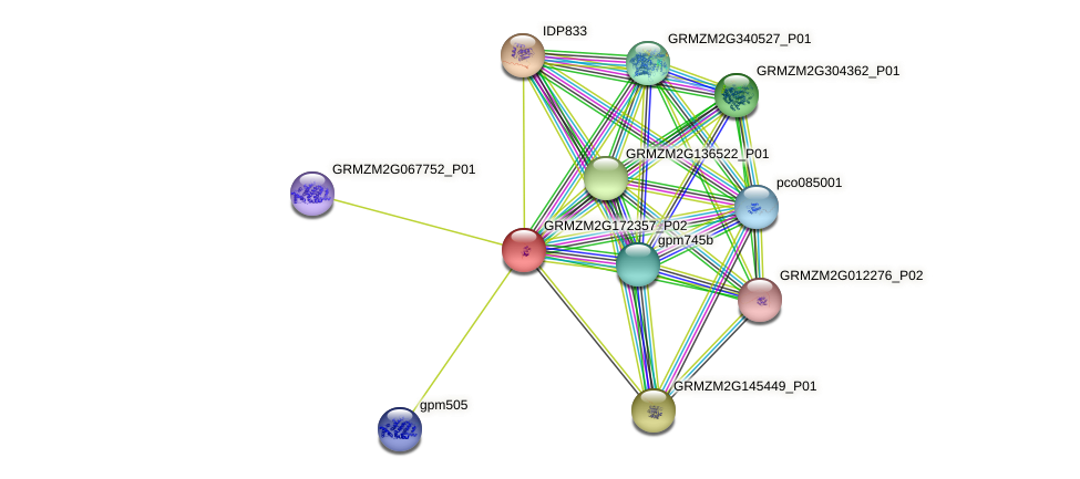 GRMZM2G172357_P02 protein (Zea mays) - STRING interaction network