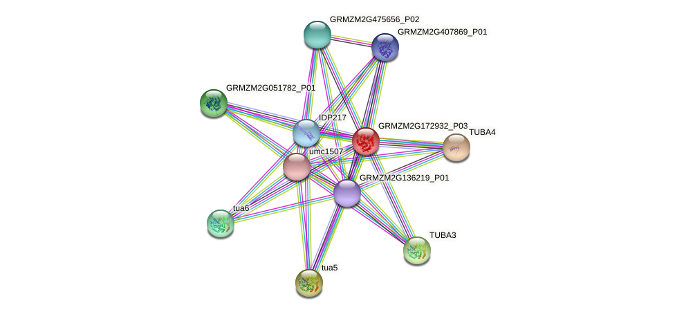 GRMZM2G172932_P03 protein (Zea mays) - STRING interaction network
