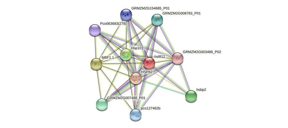 hsf12 protein (Zea mays) - STRING interaction network
