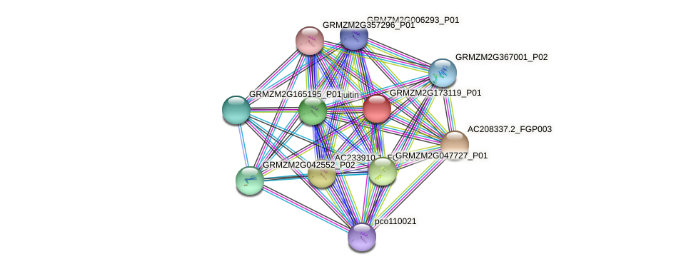GRMZM2G173119_P01 protein (Zea mays) - STRING interaction network