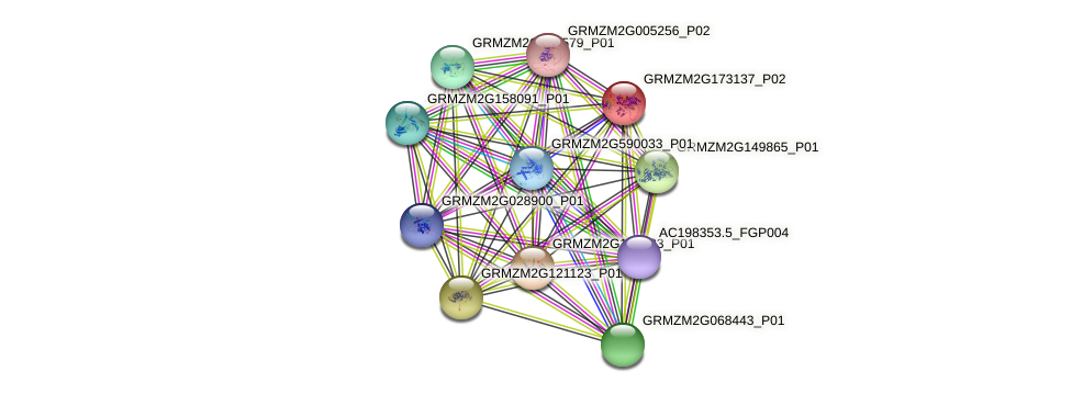 GRMZM2G173137_P02 protein (Zea mays) - STRING interaction network
