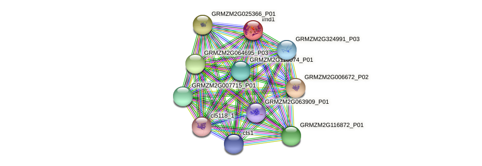 GRMZM2G173251_P01 protein (Zea mays) - STRING interaction network