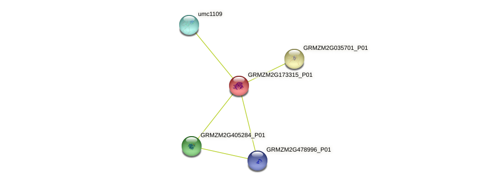 GRMZM2G173315_P01 protein (Zea mays) - STRING interaction network