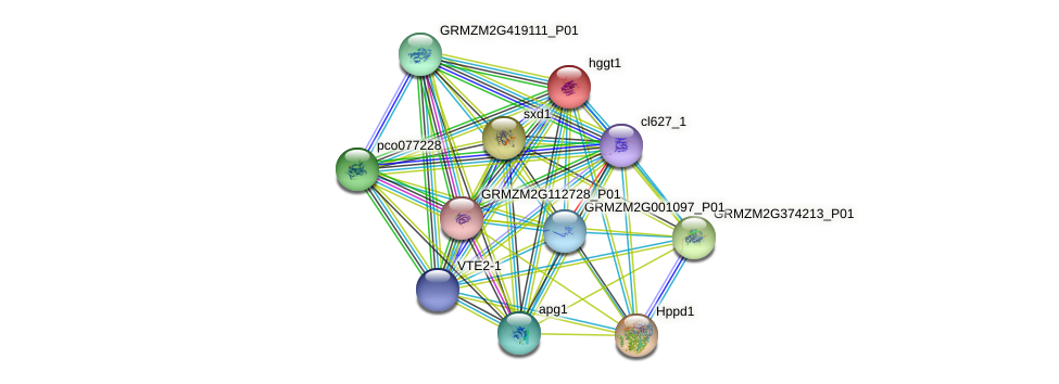 hggt1 protein (Zea mays) - STRING interaction network