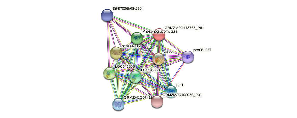 GRMZM2G173668_P01 protein (Zea mays) - STRING interaction network