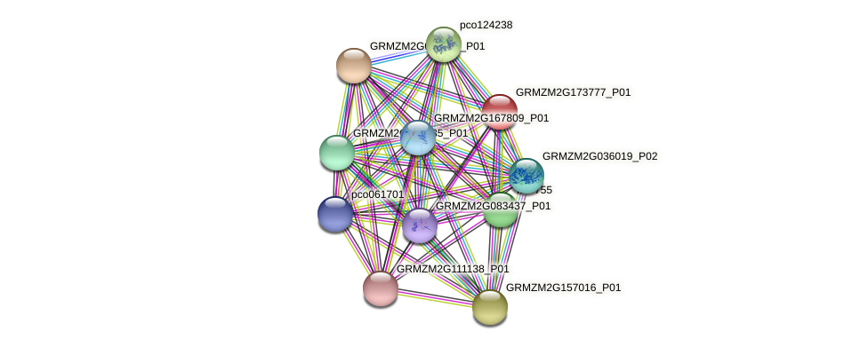 Zm.73729 protein (Zea mays) - STRING interaction network