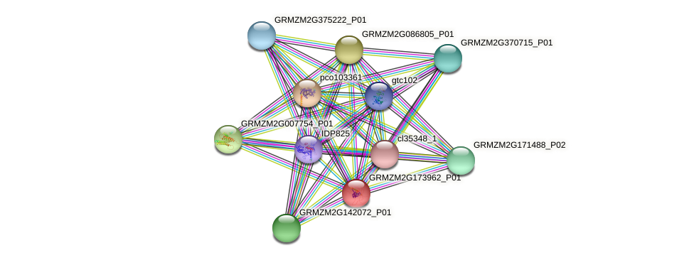 100381525 protein (Zea mays) - STRING interaction network