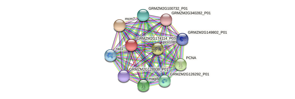 GRMZM2G174114_P03 protein (Zea mays) - STRING interaction network