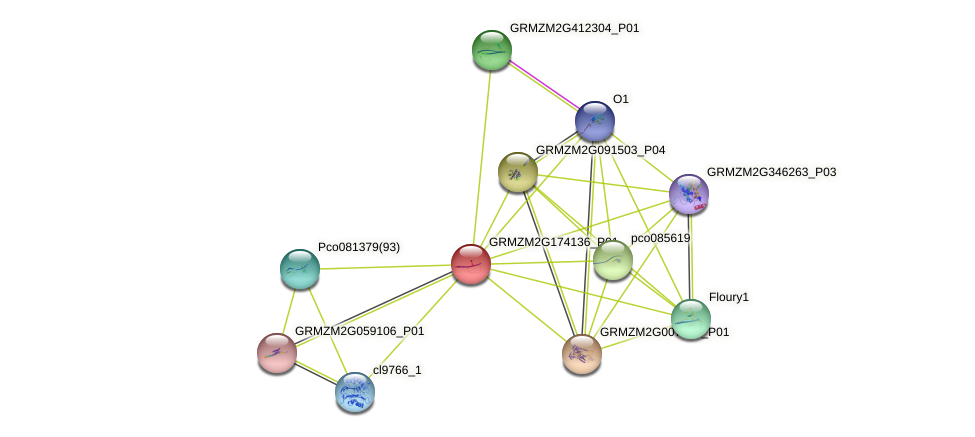 100275635 protein (Zea mays) - STRING interaction network