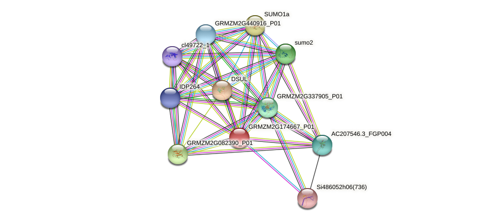 Zm.25334 protein (Zea mays) - STRING interaction network