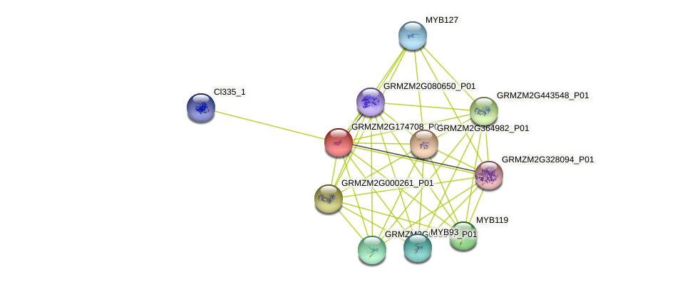 GRMZM2G174708_P01 protein (Zea mays) - STRING interaction network