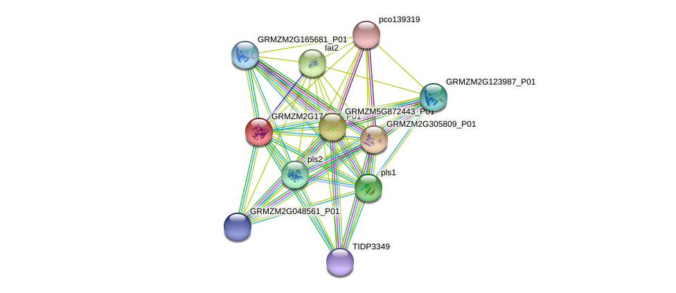 103631986 protein (Zea mays) - STRING interaction network