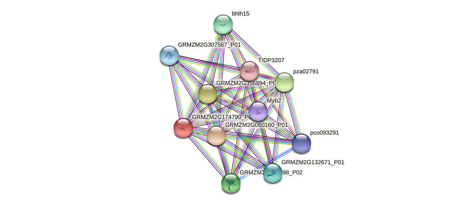 GRMZM2G174790_P01 protein (Zea mays) - STRING interaction network