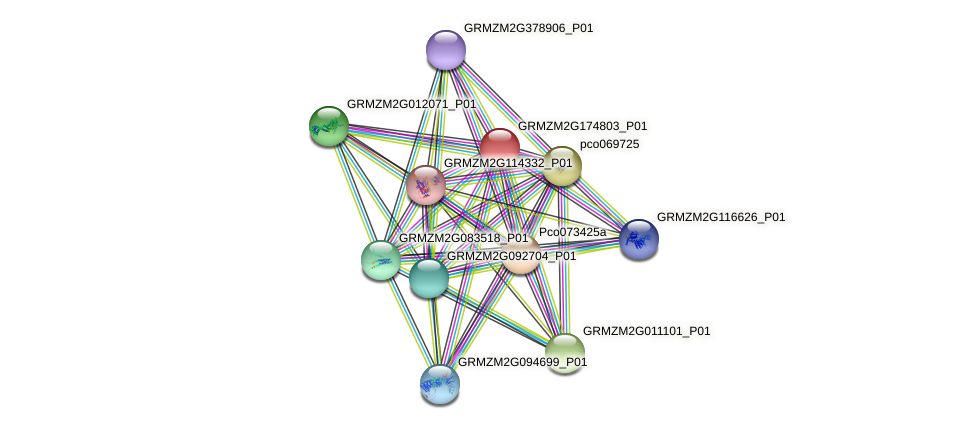 GRMZM2G174803_P01 protein (Zea mays) - STRING interaction network