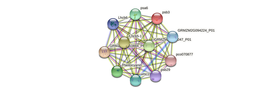 psb3 protein (Zea mays) - STRING interaction network