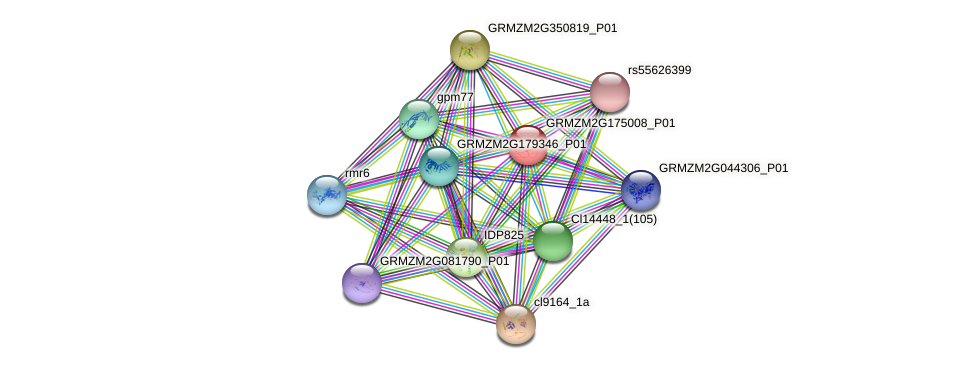 Zm.37122 protein (Zea mays) - STRING interaction network