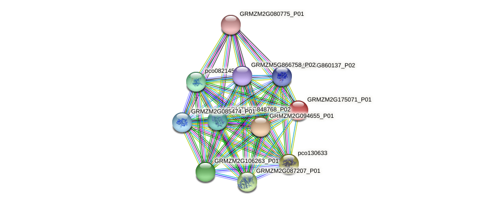GRMZM2G175071_P01 protein (Zea mays) - STRING interaction network