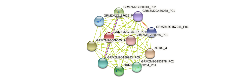 GRMZM2G175137_P01 protein (Zea mays) - STRING interaction network