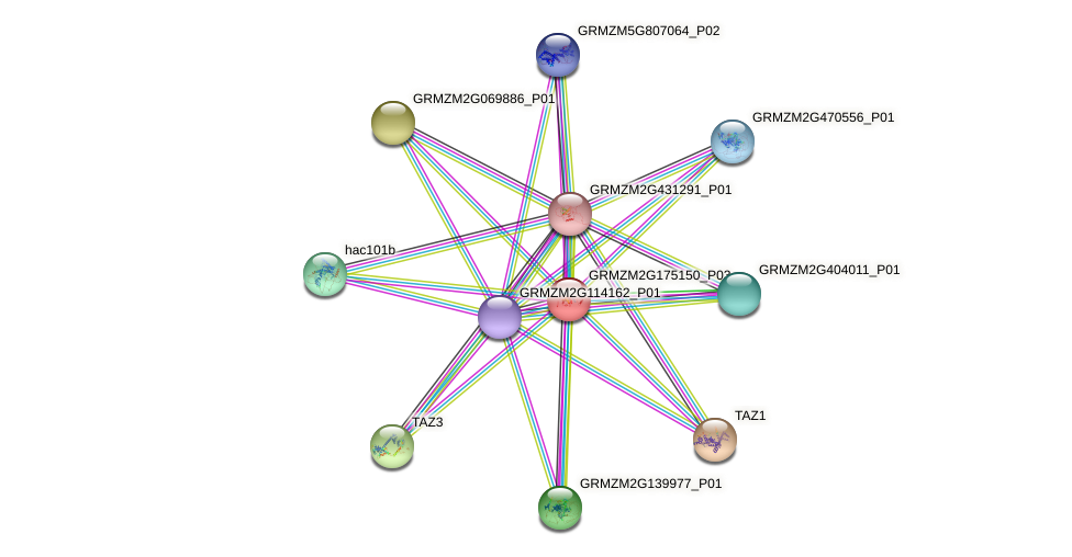 GRMZM2G175150_P03 protein (Zea mays) - STRING interaction network
