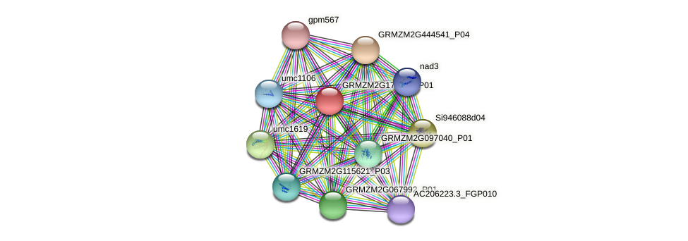 GRMZM2G175383_P01 protein (Zea mays) - STRING interaction network