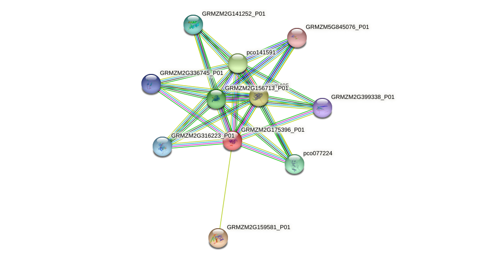 GRMZM2G175396_P01 protein (Zea mays) - STRING interaction network