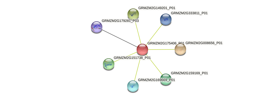 GRMZM2G175406_P01 protein (Zea mays) - STRING interaction network