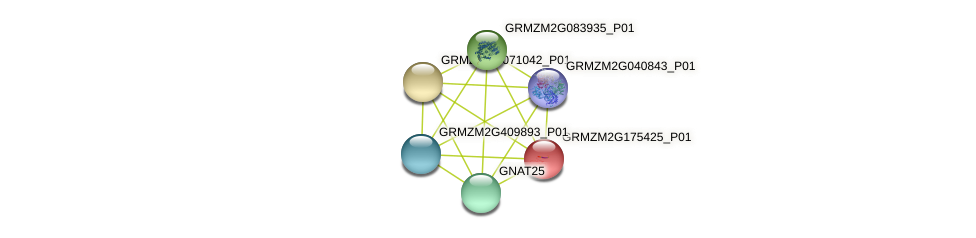 GRMZM2G175425_P01 protein (Zea mays) - STRING interaction network