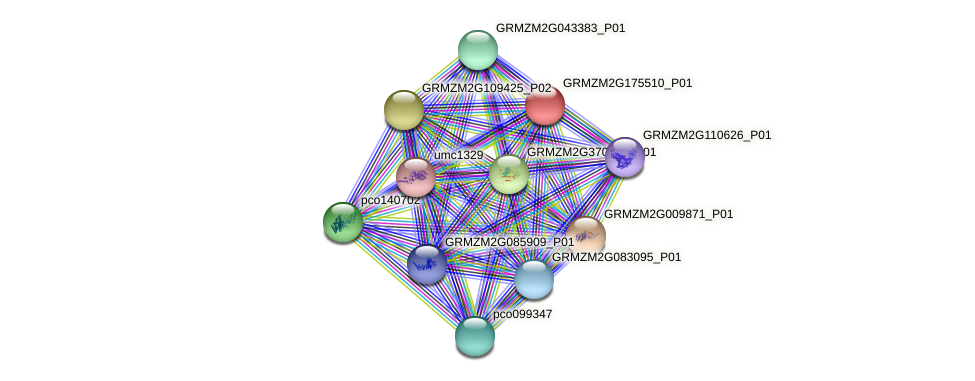 GRMZM2G175510_P01 protein (Zea mays) - STRING interaction network