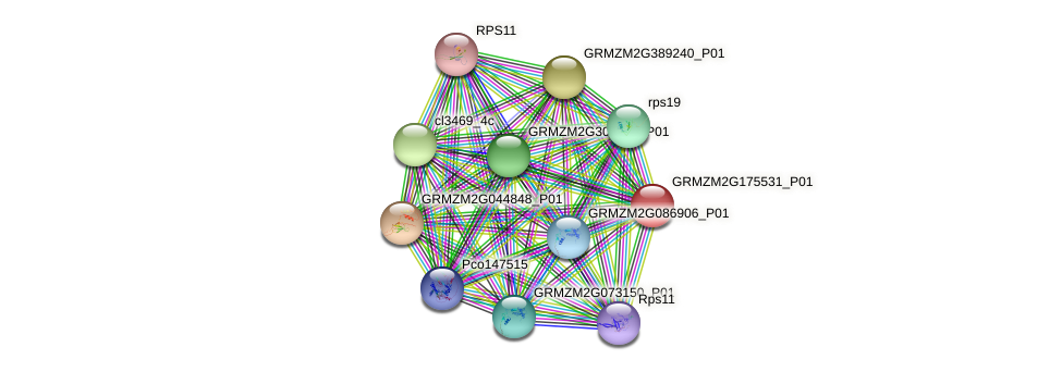 GRMZM2G175531_P01 protein (Zea mays) - STRING interaction network