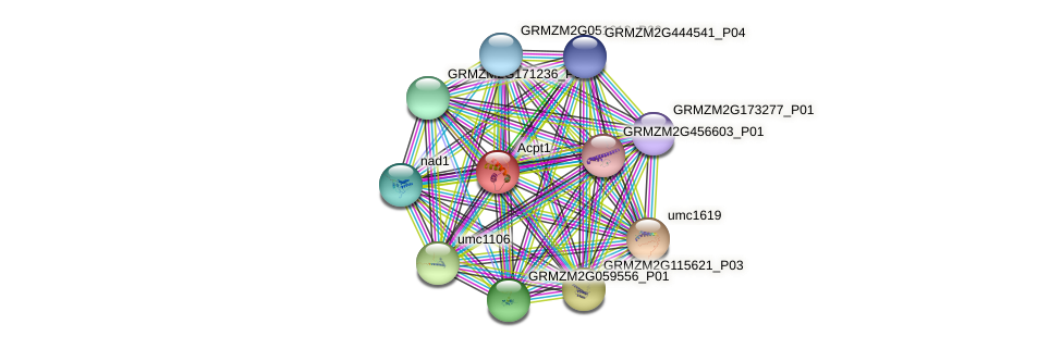 Zm.70 protein (Zea mays) - STRING interaction network