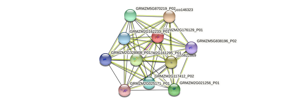 GRMZM2G176129_P01 protein (Zea mays) - STRING interaction network