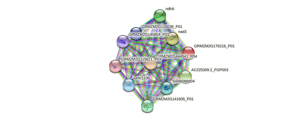 GRMZM2G176216_P01 protein (Zea mays) - STRING interaction network