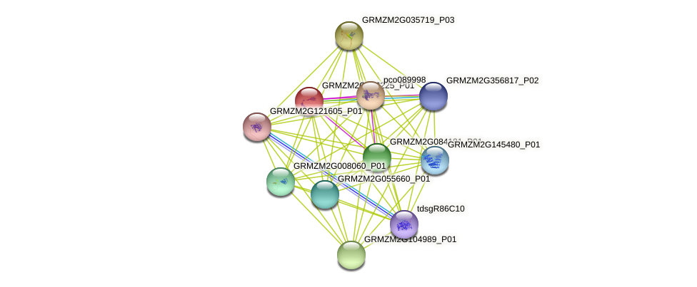 GRMZM2G176225_P01 protein (Zea mays) - STRING interaction network