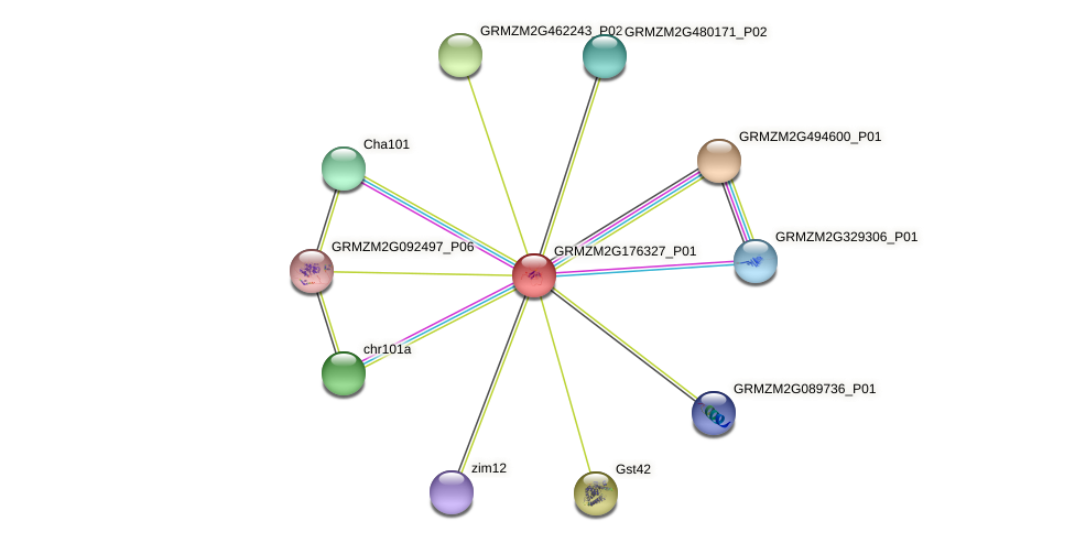myb110 protein (Zea mays) - STRING interaction network