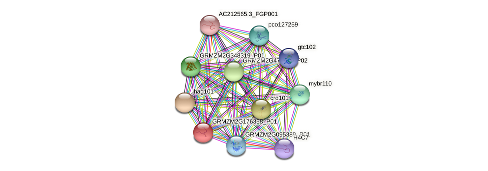 GRMZM2G176358_P01 protein (Zea mays) - STRING interaction network