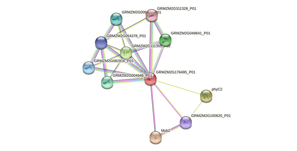 GRMZM2G176495_P01 protein (Zea mays) - STRING interaction network