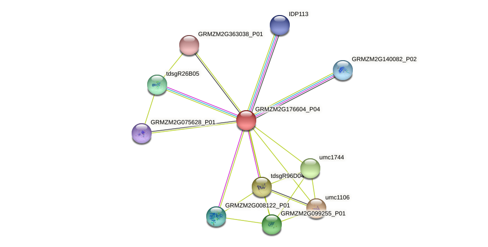 GRMZM2G176604_P04 protein (Zea mays) - STRING interaction network