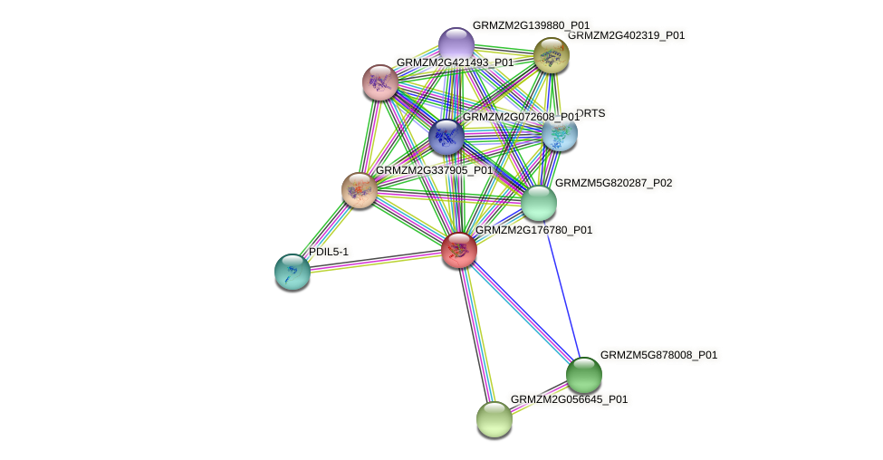 GRMZM2G176780_P01 protein (Zea mays) - STRING interaction network