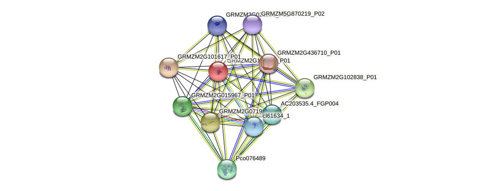 100281199 protein (Zea mays) - STRING interaction network