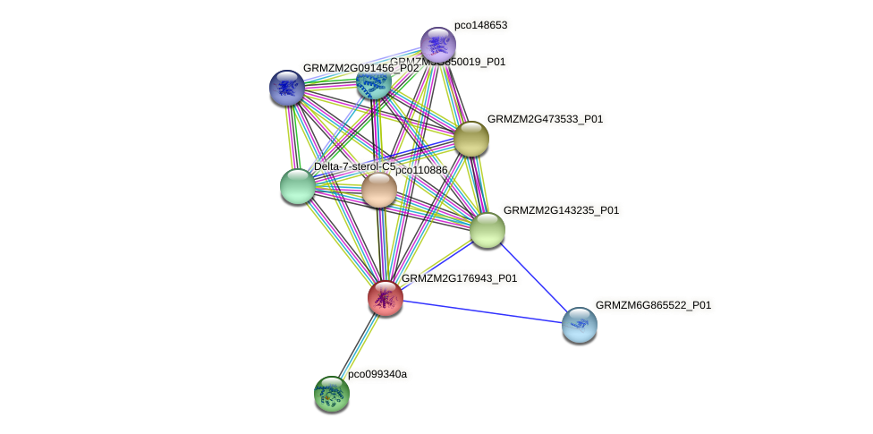 GRMZM2G176943_P01 protein (Zea mays) - STRING interaction network