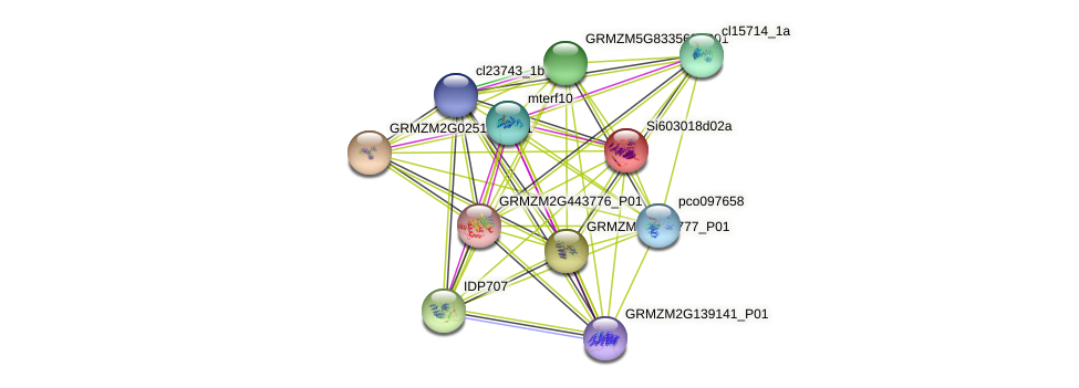 GRMZM2G177072_P01 protein (Zea mays) - STRING interaction network
