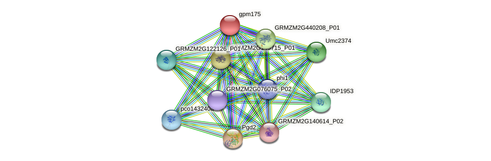gpm175 protein (Zea mays) - STRING interaction network