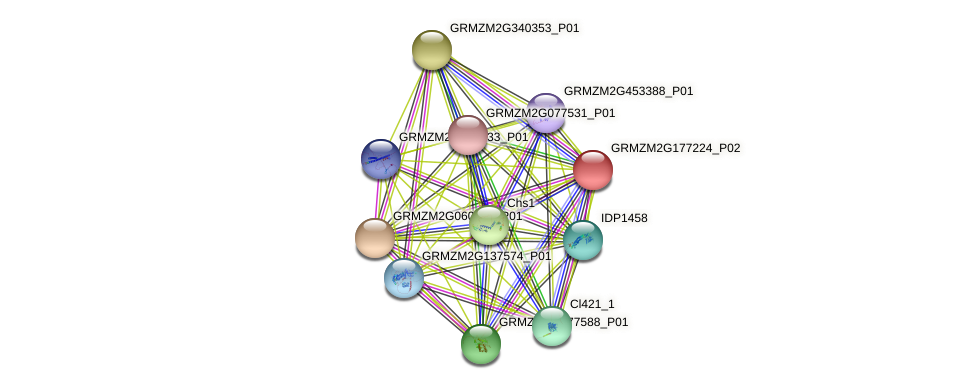 GRMZM2G177224_P02 protein (Zea mays) - STRING interaction network