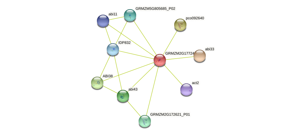 ABI31 protein (Zea mays) - STRING interaction network