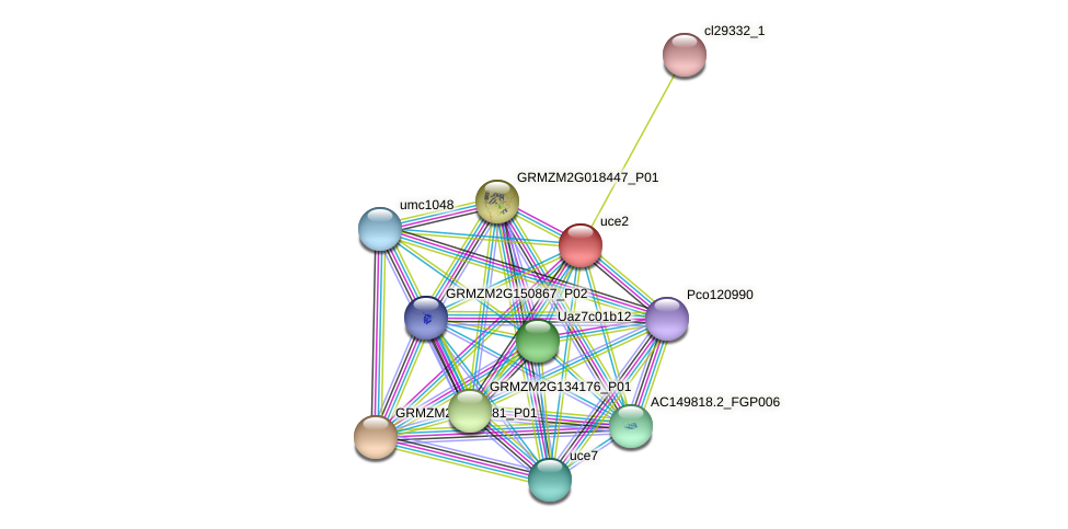 uce2 protein (Zea mays) - STRING interaction network