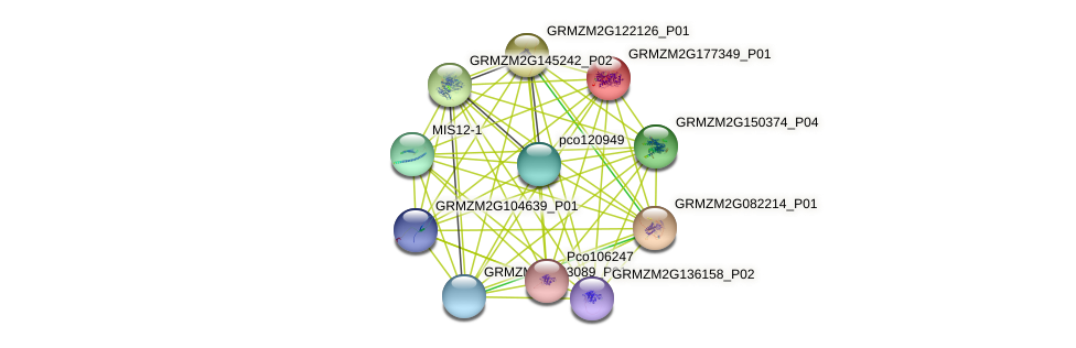 GRMZM2G177349_P01 protein (Zea mays) - STRING interaction network