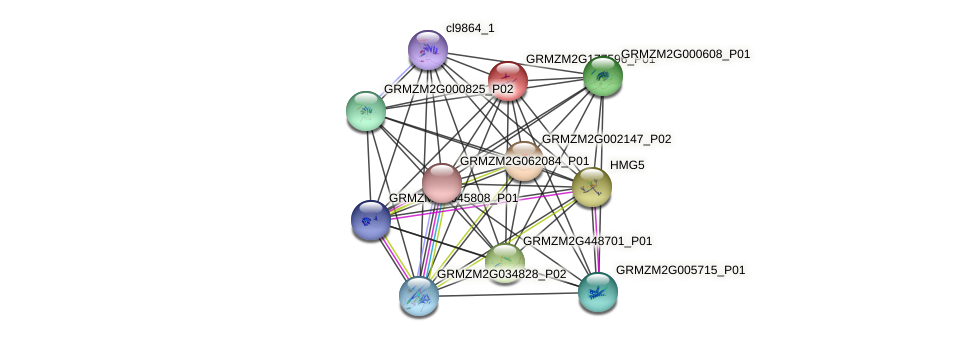 GRMZM2G177596_P01 protein (Zea mays) - STRING interaction network